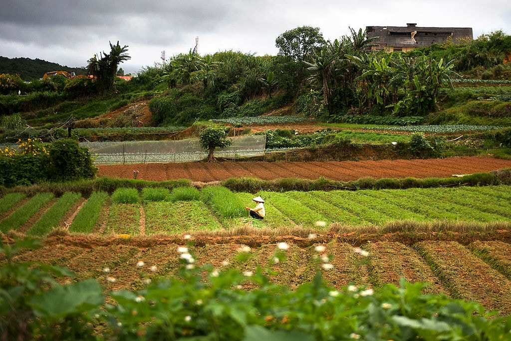 Da Lat: The Centre of Vietnamese Agriculture