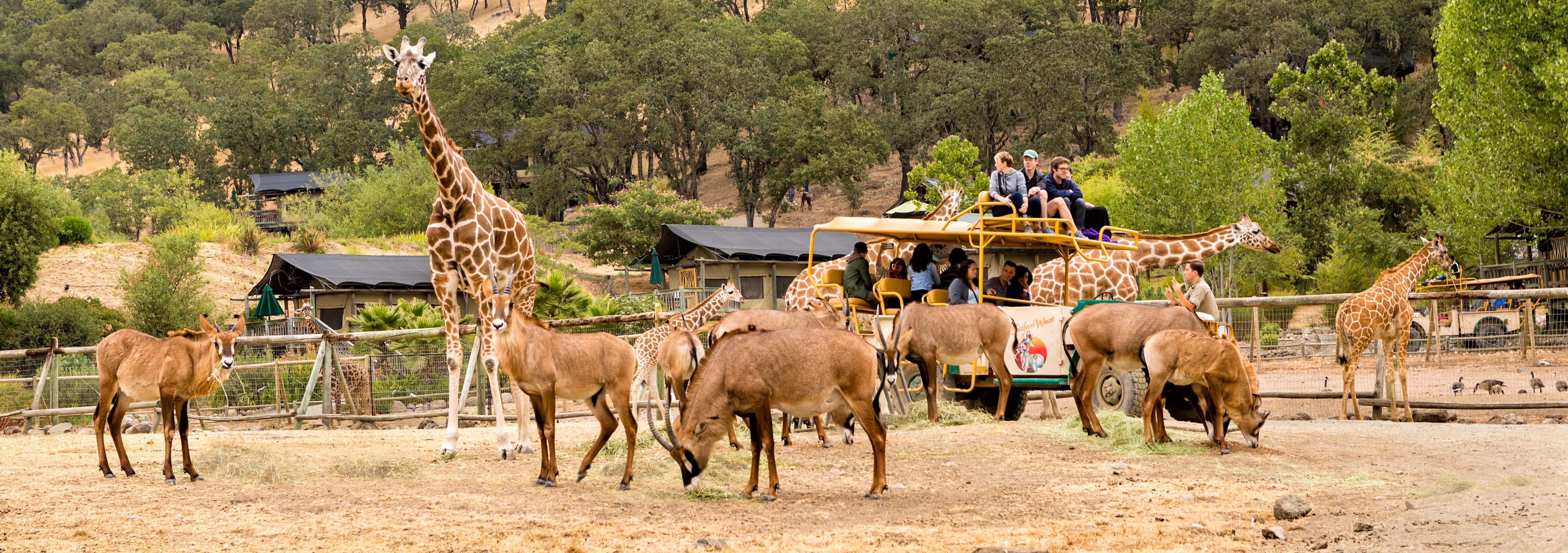 Safari West Wildlife Preserve and African Tent Camp