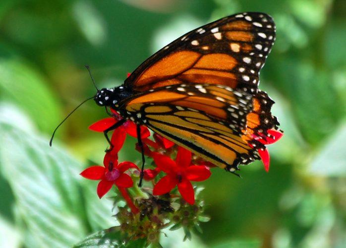Butterfly at Fairchild Botanical Garden
