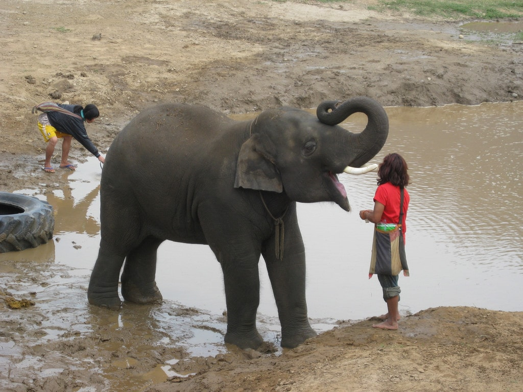 Elephant tourism in Thailand