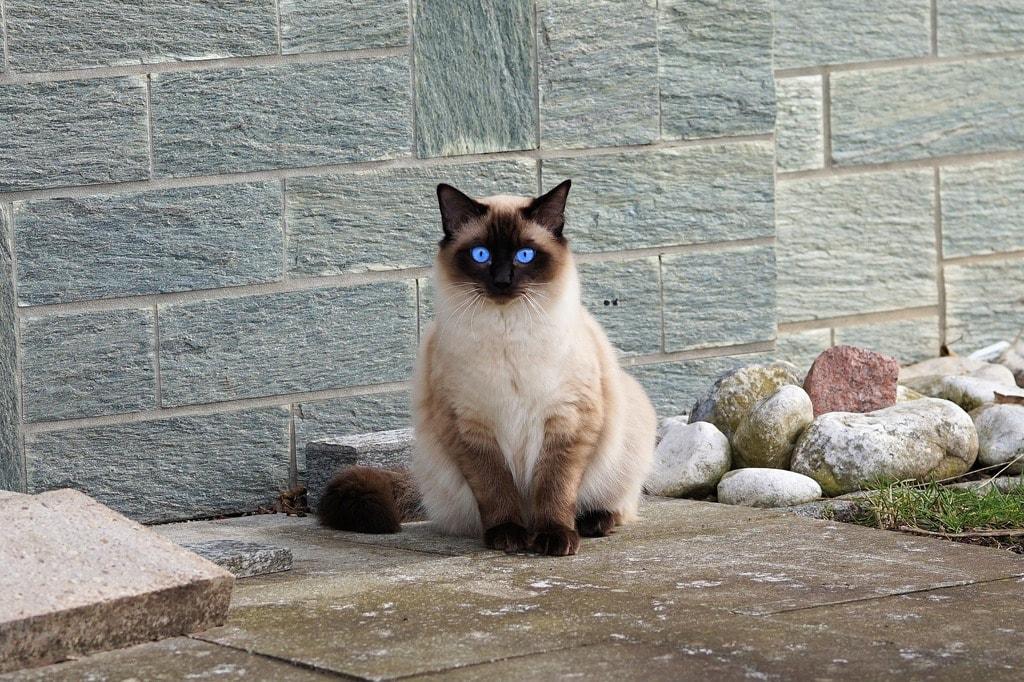 cat-2126225_1920