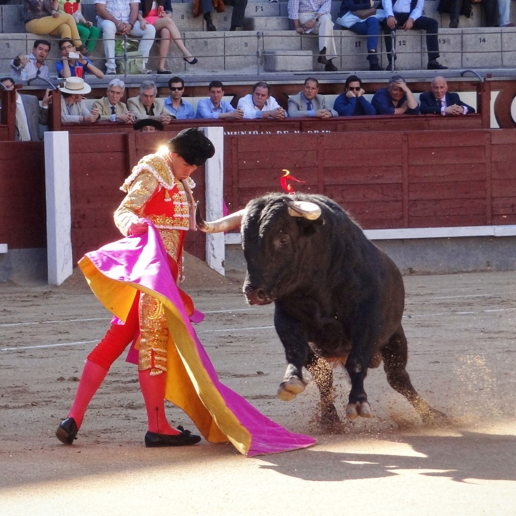 the history role and traditional significance of the sport of bullfighting Bullfighting spain's bloody bullfighting tradition appalls some and fascinates others this violent sport continues to be immensely popular in many parts of spain, despite the outrage and protests.