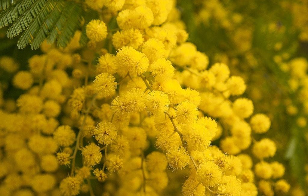 flower-3123134_1280