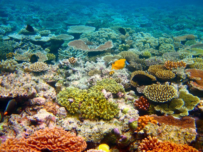 Great Barrier Reef © Kyle Taylor:Flickr