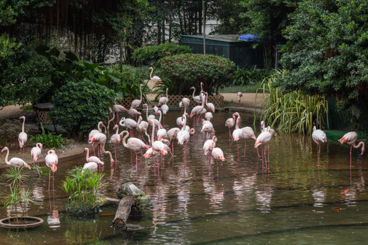 There's a pond full of flamingoes at Kowloon Park