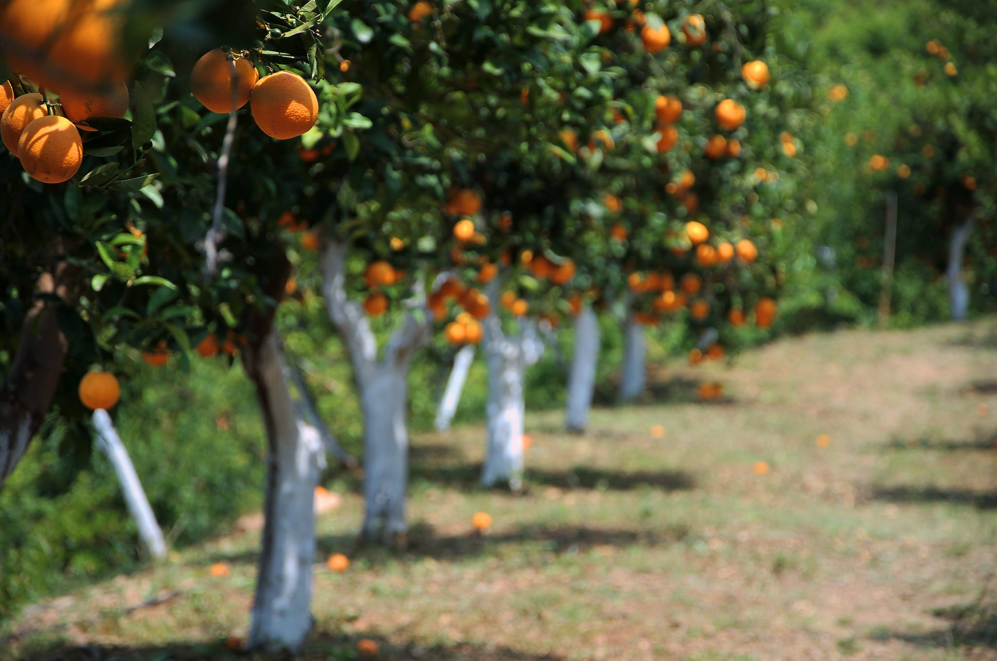 History of the word orange