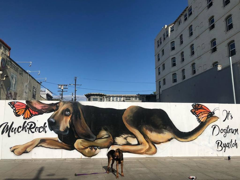 julesmuck-dog-venice beach