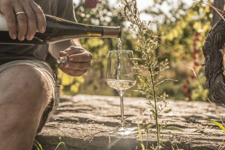 lowres_00000033976-viennese-art-of-wine-oesterreich-werbung-Nina Baumgartner - Edited