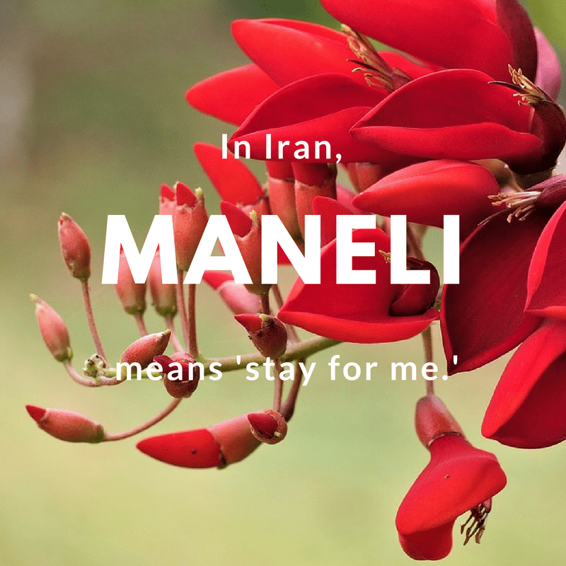 Maneli- stay for me   © vinsky2002 / Pixabay