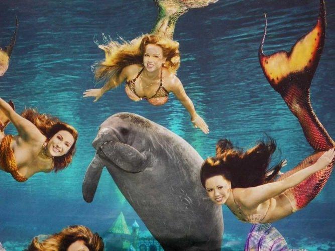 The mermaids of Weeki Wachee Springs.
