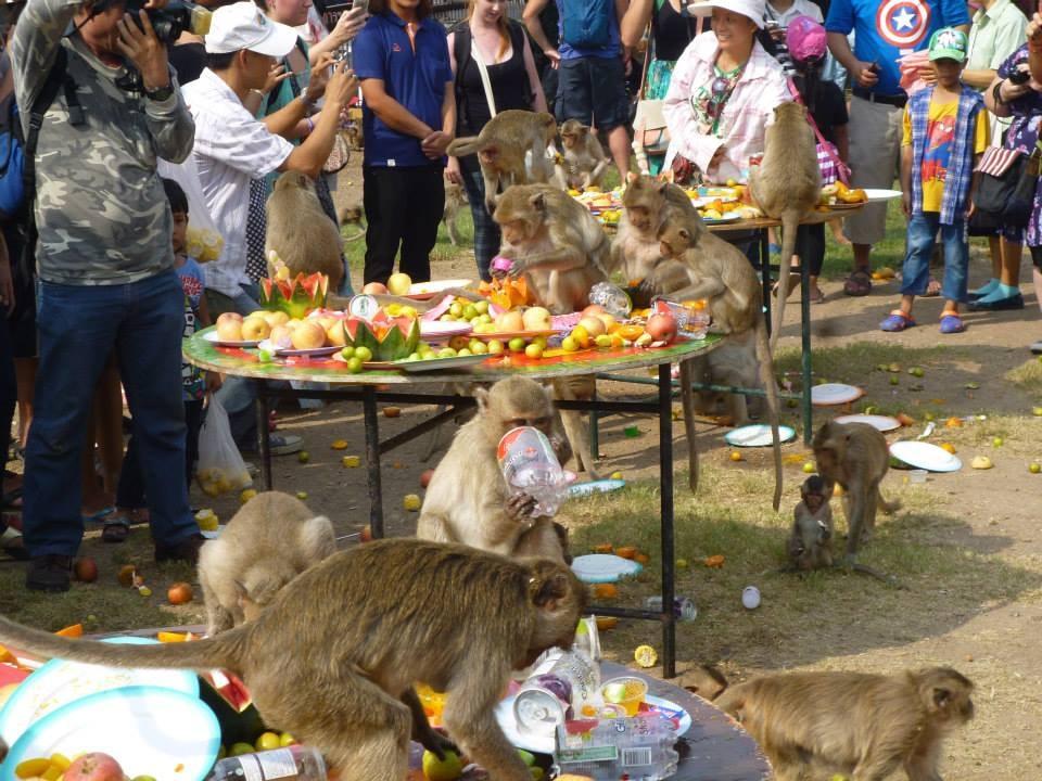 monkey feast