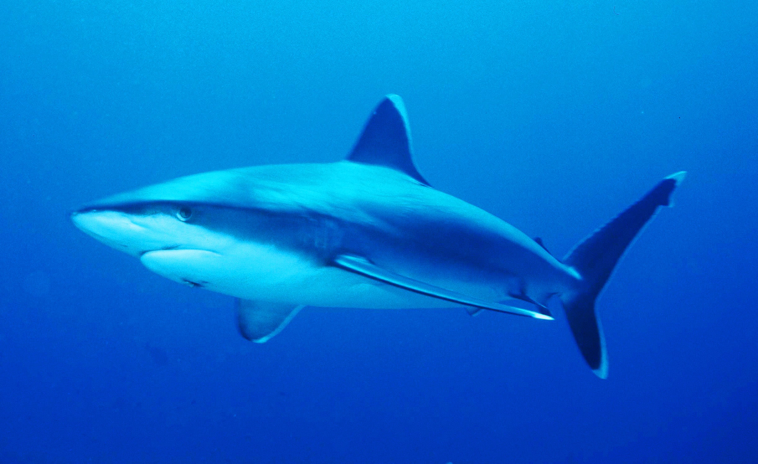 The Most Shark-Infested Waters in Australia