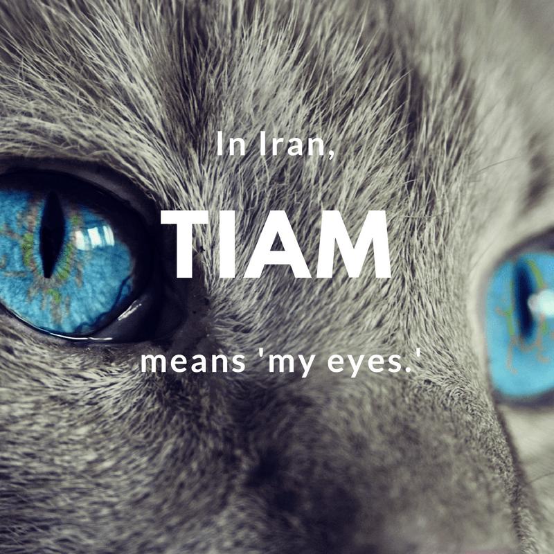 Tiam- my eyes   © cocoparisienne / Pixabay
