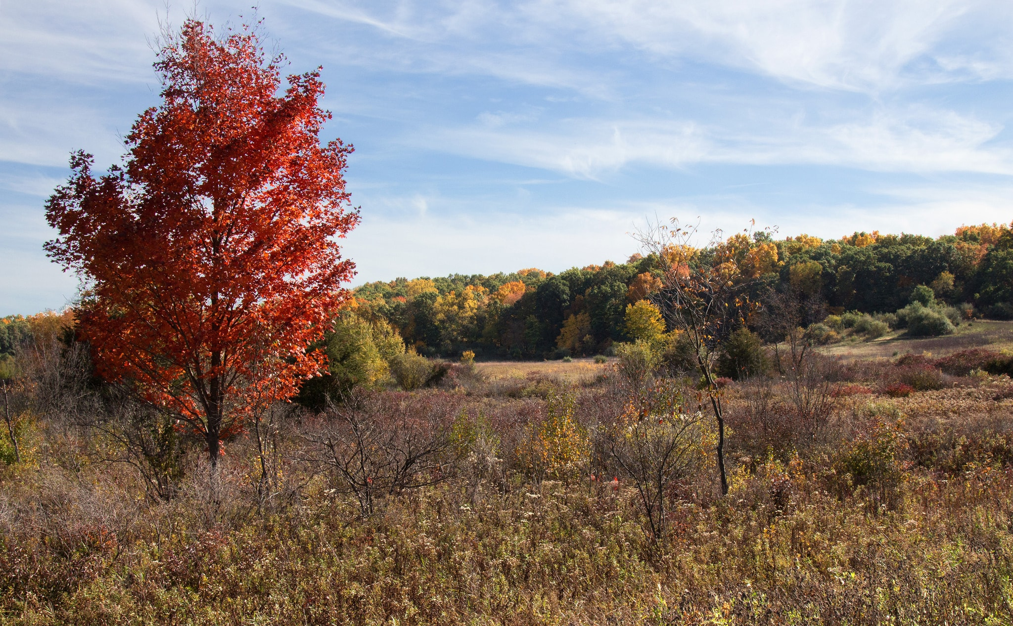 The Best Day Trips From Lansing, Michigan