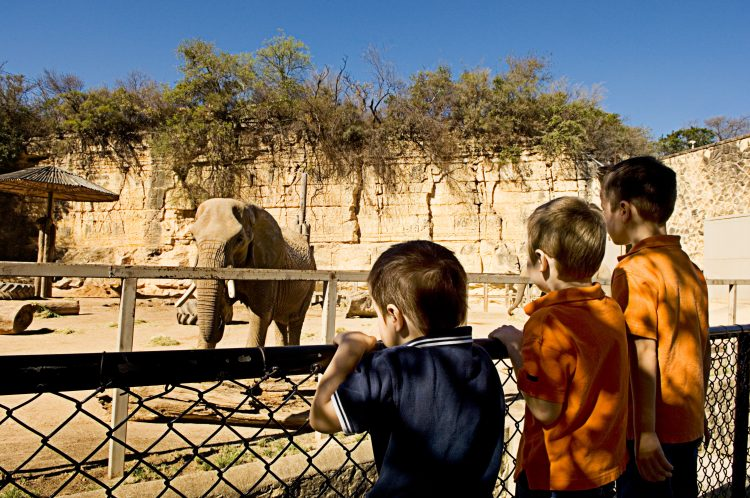Three brothers watching an elephant at the San Antonio Zoo.