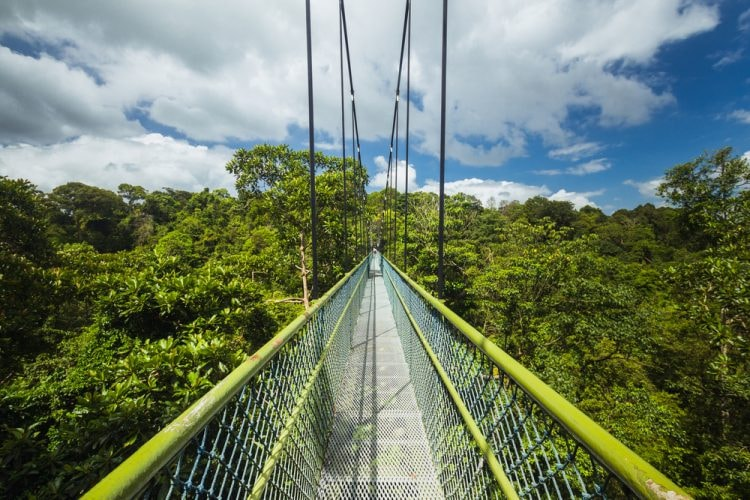 TreeTop Walk, the highlight of several long hiking routes in MacRitchie Reservoir Park, Singapore