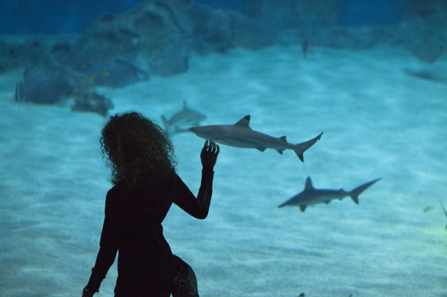 Why You Need to Visit Denmark's Blue Planet Aquarium
