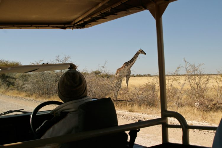 Watching giraffe from safari truck in Etosha wildlife park, Namibia