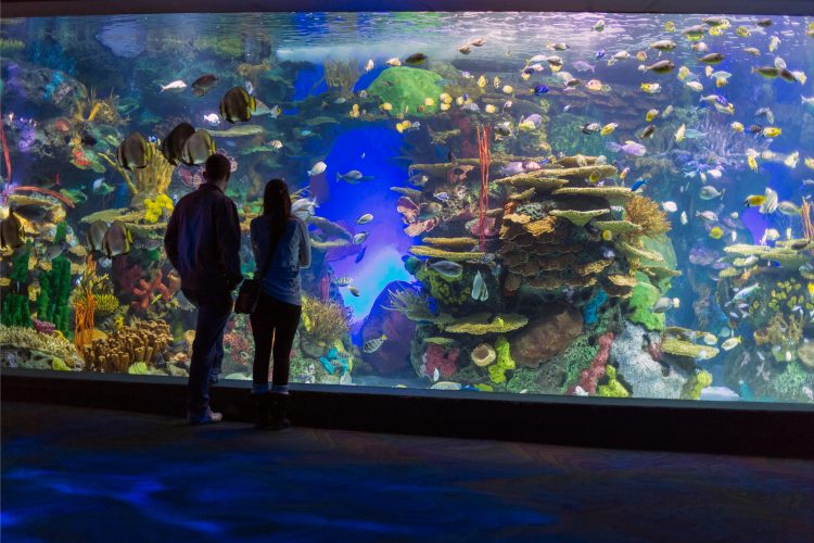 Canada,Ontario,Toronto,Ripley's Aquarium of Canada, people viewing a display. Image shot 2015. Exact date unknown.