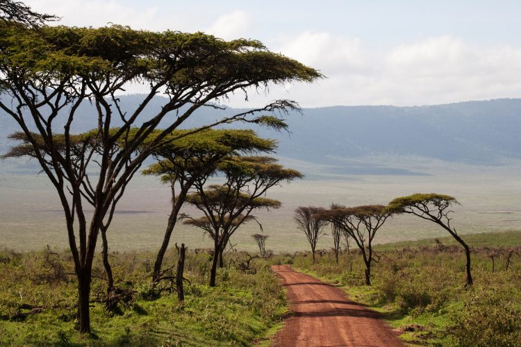 Road descending into Ngorongoro Crater, Tanzania